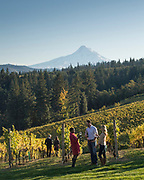 Winetasting at Phelps Creek Vineyard with Mt. Hood in the background, Hood River, Oregon