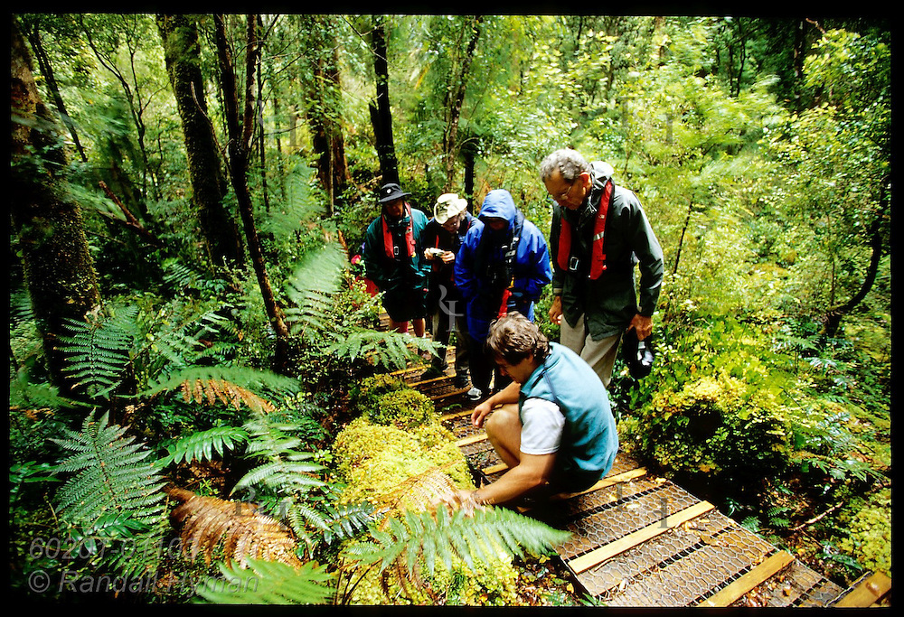 Cruise line lecturer Paddy Ryan examines moss with passengers on hike to Astronomer's Point; Dusky Sound, Fiordland NP, NZ