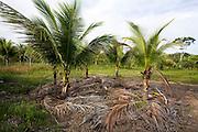 Porto Seguro_BA, Brasil...Arraial Dajuda. Projeto de Permacultura na fazenda do Jorgen Botz...Arraial Dajuda. The permaculture project in the Jorgen Botz farm...Foto: LEO DRUMOND / NITRO