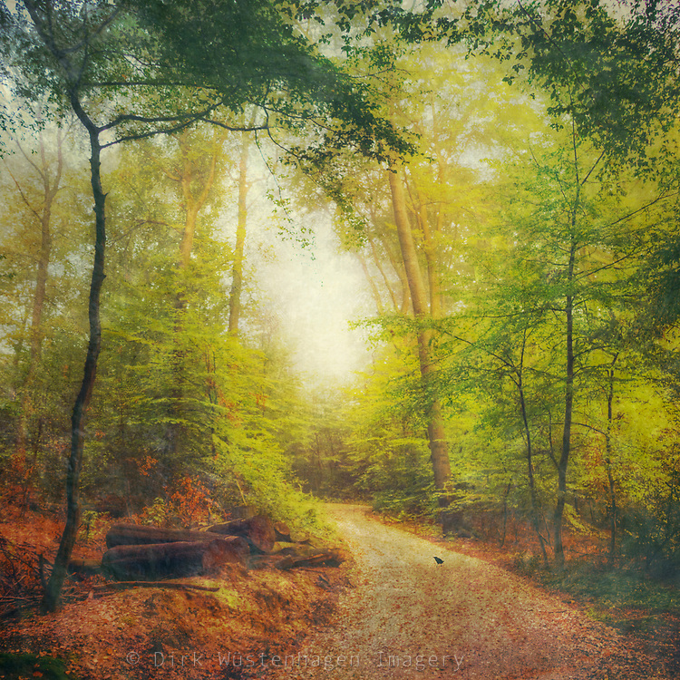 Forest in early autumn<br />