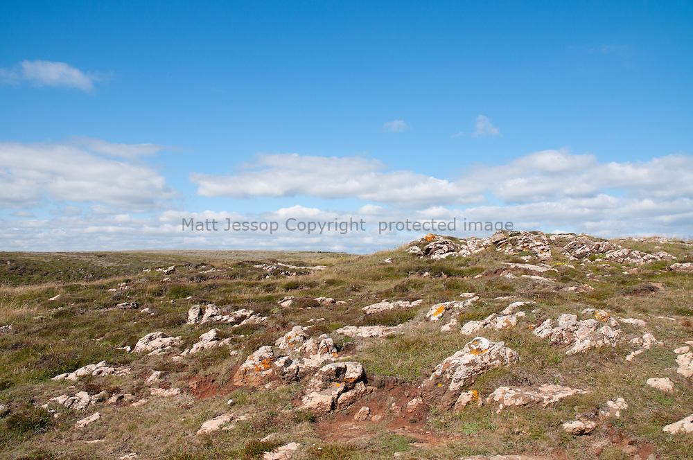 Lizard Rocks