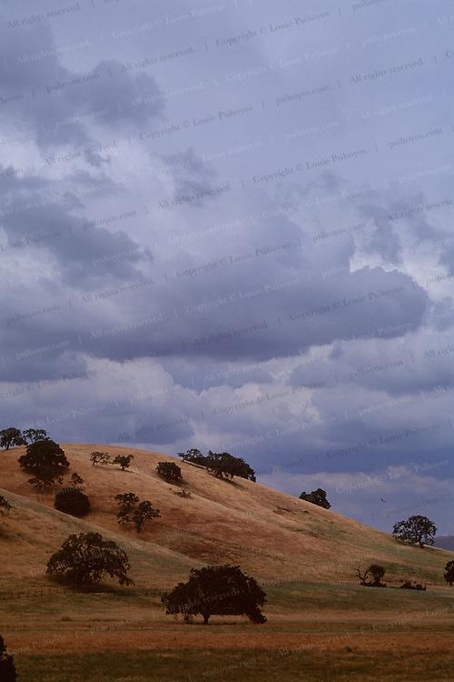 Bird soars over California Oaks near Hiway 101.