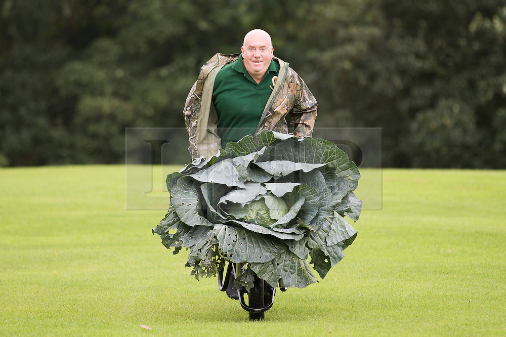 © Licensed to London News Pictures. 16/09/2016. Harrogate UK. Picture shows Paul Bastow & his prize winning cabbage that weighed 25.4 kg at the Giant vegetable competition in Harrogate. The competition see's competitors from across the UK show their biggest Carrot's, Cucumbers, Cabbages, Onion's & Tomatoes competing for the title of heaviest & longest at the Harrogate Autumn Flower Show. Photo credit: Andrew McCaren/LNP