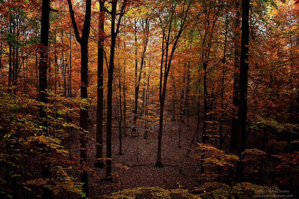 Beautiful view of fall foliage onn trees in the Forest