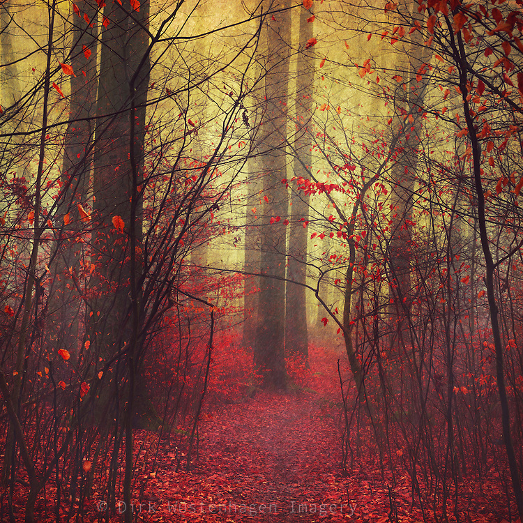 Dreamy forest on a misty day - texturized photograph<br />