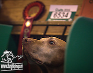 Crufts Gundog Day 2016
