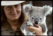 AUSTRALIA 60102: KOALAS