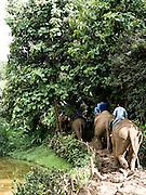 Elephants return to elephant camp.