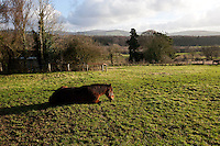Horse sitting on grass in the sun