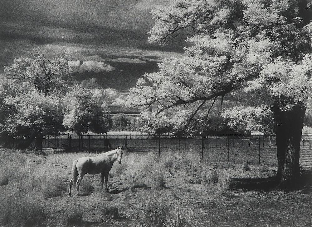Aloof Horse, Utah