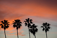 Photo sunset wall art. Santa Monica beach orange sky, palm trees, clouds. Matted print, Westside, Venice, Los Angeles, Southern California photography. Fine art photography limited edition.