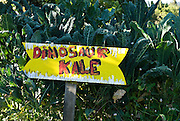 Berkeley, California, June, 2008-A sign hand painted by children labeling dinosaur Kale at the Edible Schoolyard. The organic garden was founded by Alice Waters of Chez Panisse to involve students in all aspects of farming.