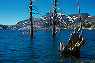 Aloha Lake near Lake Tahoe, California. Dead stumps and barren trunks protrude from the cobalt water.