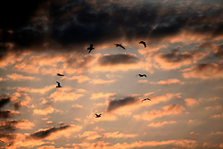 UK ENGLAND NORFOLK WALCOTT 20MAY07 - Seagulls in the evening sky at the beach in Walcott, north Norfolk coast...jre/Photo by Jiri Rezac..© Jiri Rezac 2007..Contact: +44 (0) 7050 110 417.Mobile:  +44 (0) 7801 337 683.Office:  +44 (0) 20 8968 9635..Email:   jiri@jirirezac.com.Web:    www.jirirezac.com..© All images Jiri Rezac 2007 - All rights reserved.