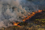 Fire in wetland<br /> East Demerara Conservancy<br /> East of Georgetown<br /> GUYANA<br /> South America