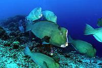 Underwater Sabah, Malaysia around Sipadan, Mabul and Kapalai Islands