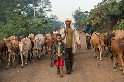 Awol Abagojam and his son Isaac  walk in Choche, in Jimma Ethiopia which people say is the birthplace of coffee. The region is home to the largest pool of genetic diversity in the world of coffee. It is home to more genetic diversity in coffee than the rest of the producing countries combined by a huge margin.