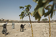 Men involved in a FAO-sponsored, food-security agricultural project work in a field outside Mao, Kanem region, Chad on Monday February 13, 2012.