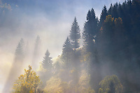 Forest in mornig light, National Park Piatra Craiului, Transylvania, Southern Carpathians, Romania