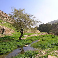 Wilderness of Judah-Wadi Qilt