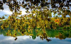 Autumn leaves hang over the Garonne River in Toulouse, France<br /> <br /> (c) Andrew Wilson | Edinburgh Elite media