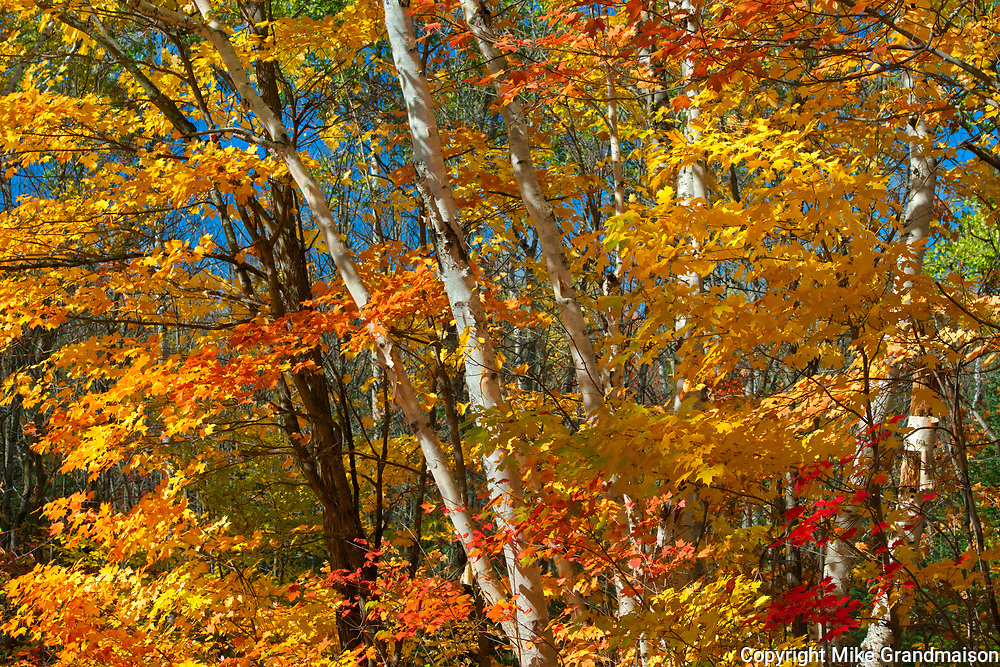 Autumn trees on Horseshoe Lake<br />