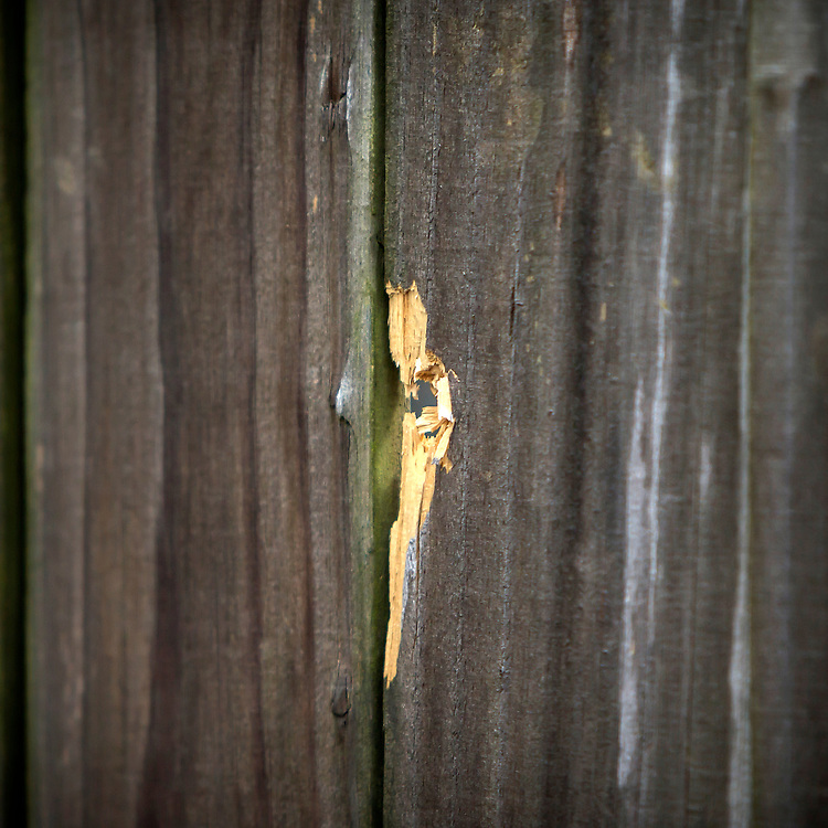 NORTH CHARLESTON, SC. - APRIL, 20, 2015: A bullet hole in a wooden fence became a source of interest to forensic experts working the site where Walter Scott was shot to death by a white North Charleston police officer in North Charleston, S.C.  CREDIT: Stephen B. Morton for The New York Times