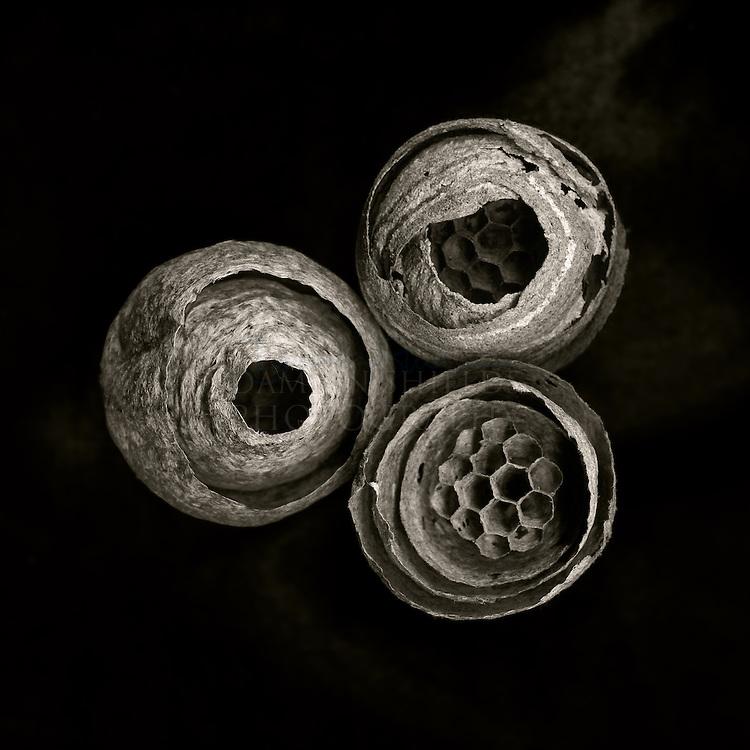 Wasps Nests