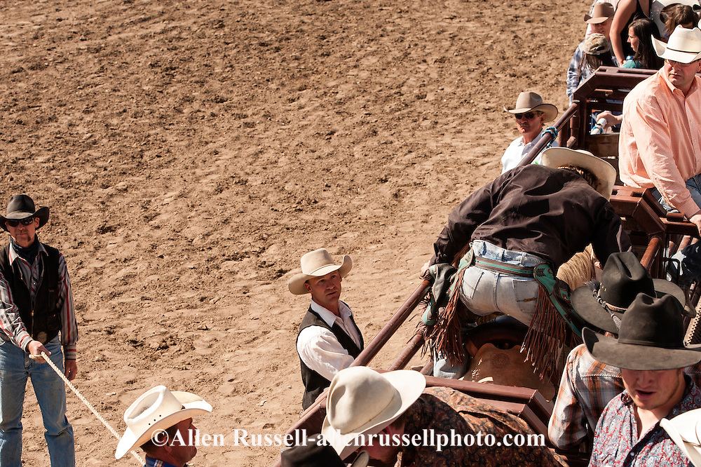 Ty Linger, chute crew, helps saddle bronc rider in chute, Miles City Bucking Horse Sale, Montana.