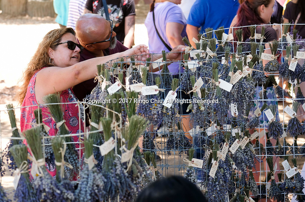 People visit the 13rd Annual Lavender Festival at 123 Farm in Cherry Valley of Riverside, California, June 17, 2017.(Photo by Ringo Chiu)<br /> <br /> Usage Notes: This content is intended for editorial use only. For other uses, additional clearances may be required.