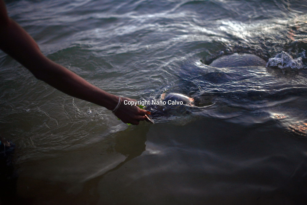 Young local man, who lost many things during the tsunami, feeds the turtles in Hikkaduwa Beach, Sri Lanka