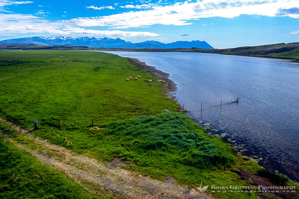 Iceland. River not far from Reykholt.