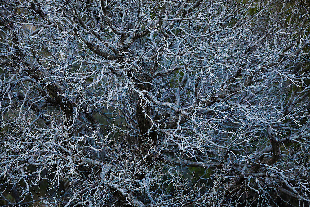 """Singular"" - Fine Art Limited Edition Print. Edition of 10 in color and 10 in Black and White. Detail view of dead tree and branches in the foothills of the Sandia Mountains, New Mexico, USA."