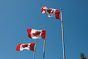 Canadian Flags flying on Canada Day 2009 Winnipeg, Canada.