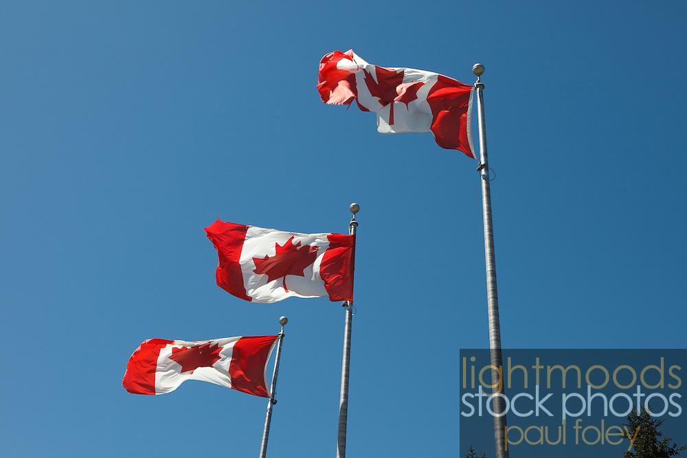 Canadian Flags flying on Canada Day 2009 Winnipeg, Canada.