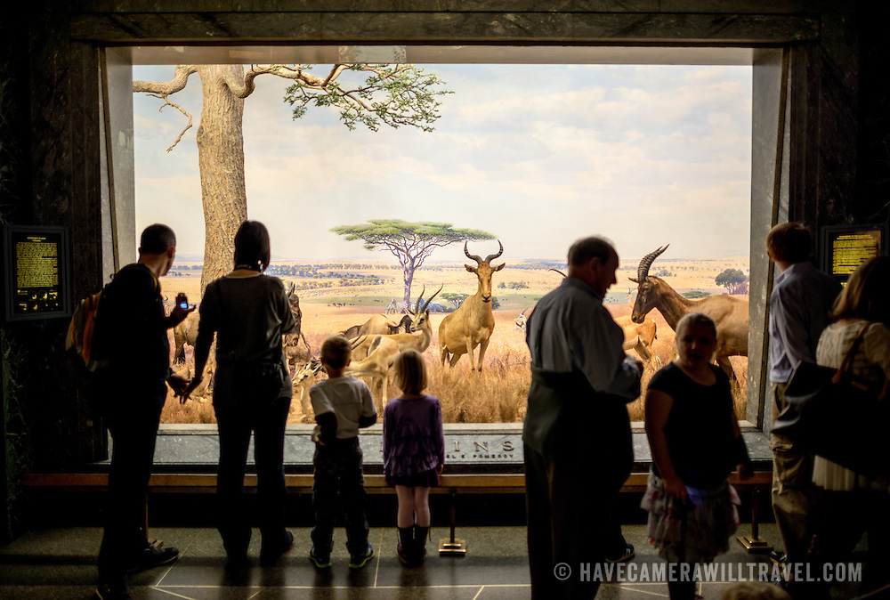 Serengeti Plains exhibit at the Museum of Natural History in New York's Upper West Side neighborhood, adjacent to Central Park.
