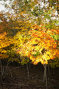 Fall foliage deep shade