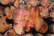 Fire Wood log stack