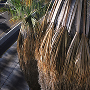 Artsy shot of palm tree near freeway overpass. Shot at the 163 freeway, San Diego, CA. Part of Washington St photo project by David Harrison