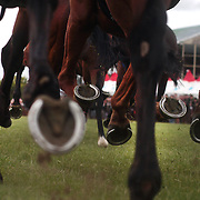 Horses hooves kick up the turf as they gallop down the finishing straight during a day at the Races at the Gore Race Meeting, Gore, Southland, New Zealand. 18th December 2011. Photo Tim Clayton