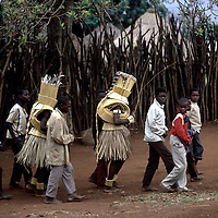 Vhawhera initiates masked in grass and reed enter the stockaded capital of the Lobedu people, ha-Modjadji, South Africa. (Greg Marinovich) horizontal colour slide. 1989.