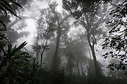 Mount Gorongoza mist-forest shrouded in thick mist, Gorongosa Mountain, Inhambane Province, Mozambique