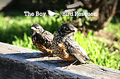 One boy - Six Birds