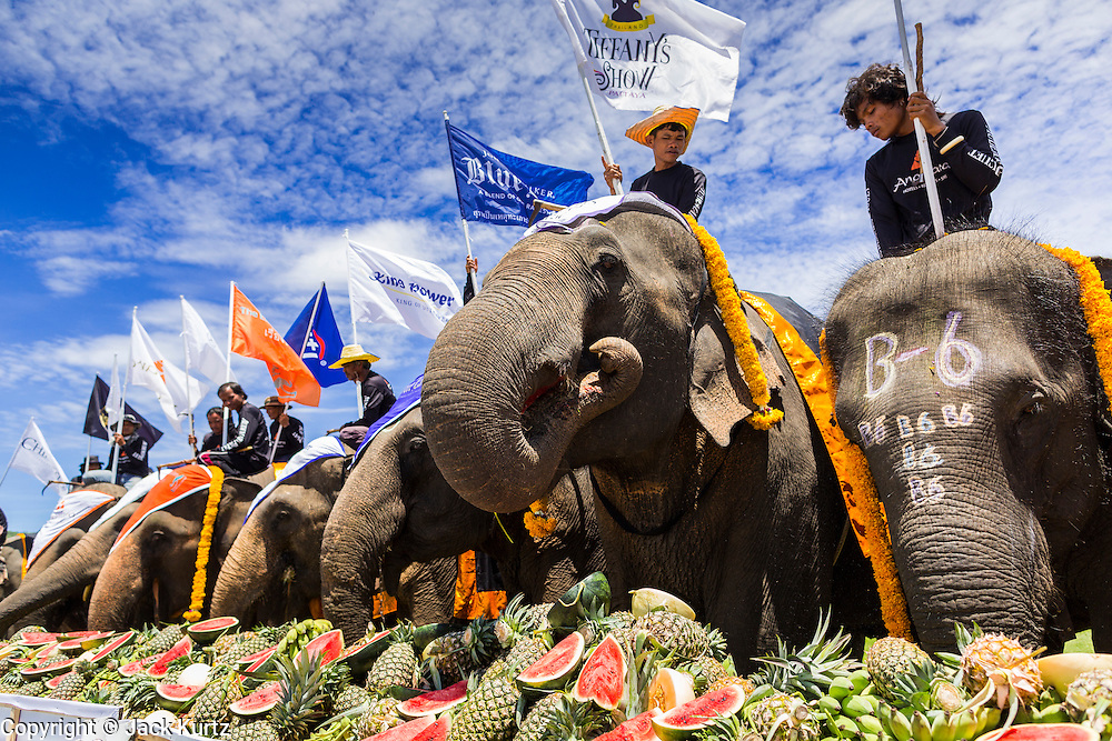"""29 AUGUST 2013 - HUA HIN, PRACHUAP KHIRI KHAN, THAILAND: Elephants eat fruit at a fruit buffet during the King's Cup Elephant Polo tournament in Hua Hin. The tournament's primary sponsor in Anantara Resorts and the tournament is hosted by Anantara Hua Hin. This is the 12th year for the King's Cup Elephant Polo Tournament. The sport of elephant polo started in Nepal in 1982. Proceeds from the King's Cup tournament goes to help rehabilitate elephants rescued from abuse. Each team has three players and three elephants. Matches take place on a pitch (field) 80 meters by 48 meters using standard polo balls. The game is divided into two 7 minute """"chukkas"""" or halves. There are 16 teams in this year's tournament, including one team of transgendered """"ladyboys.""""    PHOTO BY JACK KURTZ"""