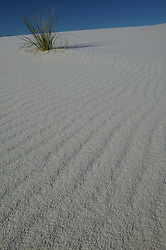 A green plant grows amidst  the desert dunes at White Sands National Monument, New Mexico.