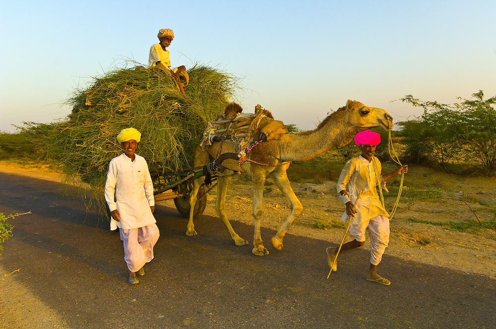 Rural Indian men and their camel cart on a road near Rohet, Rajasthan, India