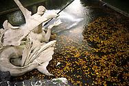 DEU, Germany, Duesseldorf, the Tritonen fountain by Coubilier at the Koenigsallee.....DEU, Deutschland, Duesseldorf, der Tritonenbrunnen von Coubilier an der Koenigsallee.........