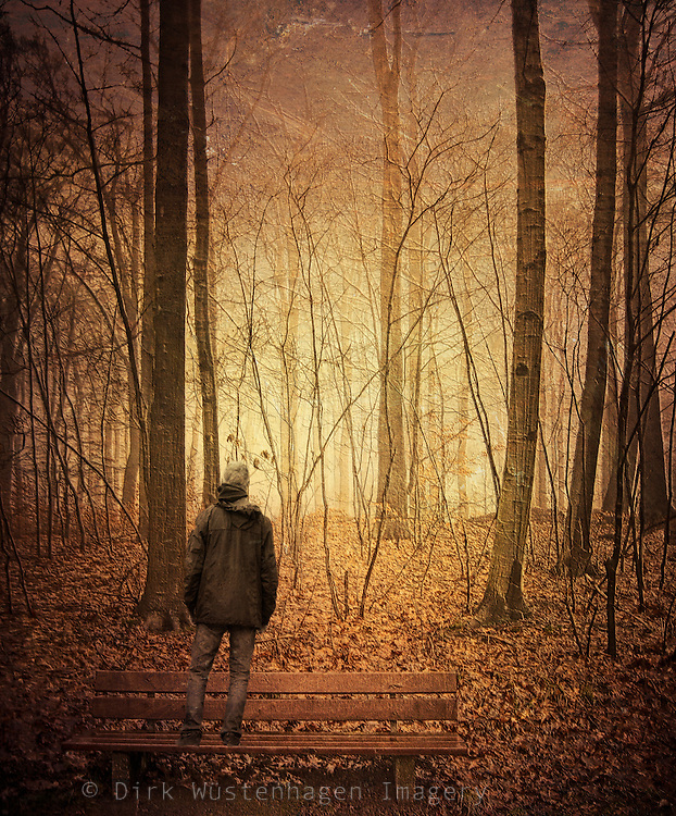 Man standing on a bench looking into a forest