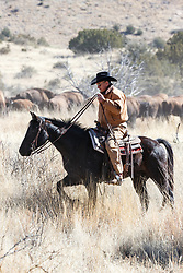 Cowboy on horseback pushing bison during bison roundup, Ladder Ranch, west of Truth or Consequences, New Mexico, USA.