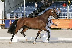 090 Bumosa<br /> Ermelo KWPN Paardendagen 2009<br /> © Hippo Foto - Karin Van Der Meul